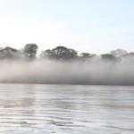Mist. Photographer: Sophia Lyn Sims